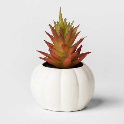 Hallow's Eve Black Succulent - Hyde and Eek! Boutique™