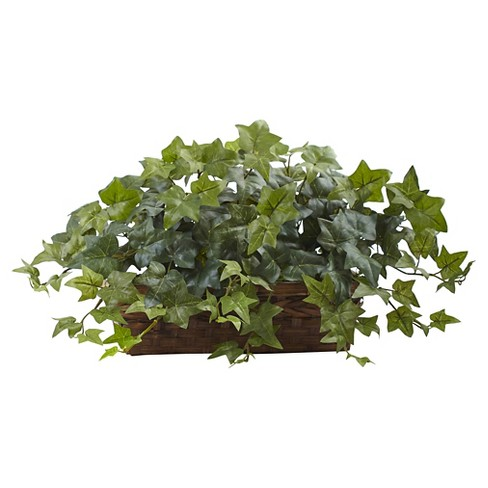 Puff Ivy in Ledge Basket - Green - image 1 of 1