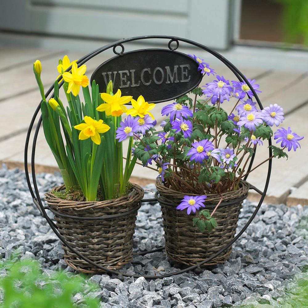 Welcome Container Garden Set of 25 Bulbs - Yellow and blue - Van Zyverden