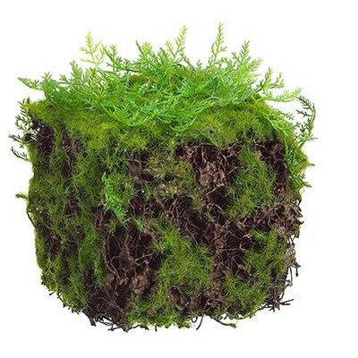 "Allstate Floral 4"" Artificial Moss Spring Table Top Cube Decoration - Green"