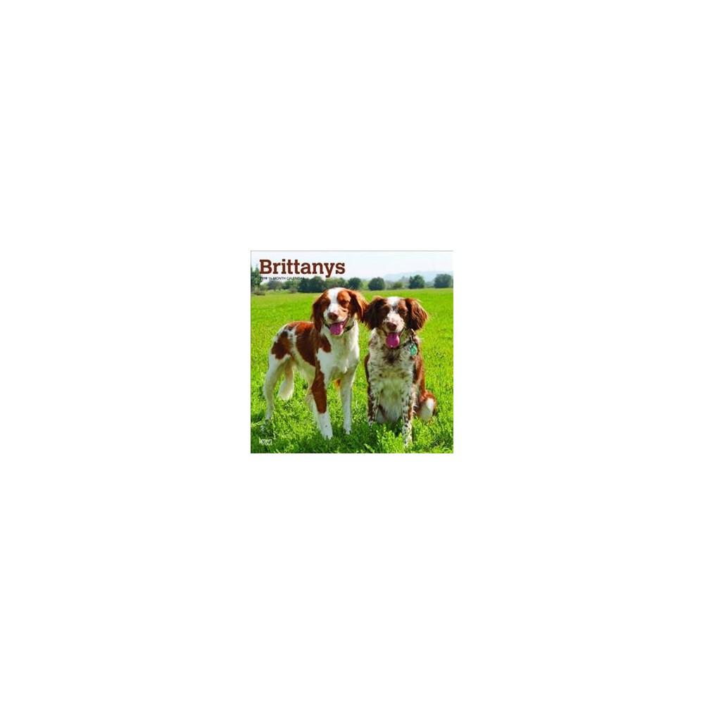 Brittanys 2019 Calendar - (Paperback)