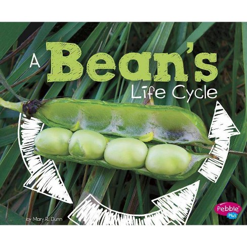 A Bean's Life Cycle - (Explore Life Cycles) by  Mary R Dunn (Paperback) - image 1 of 1