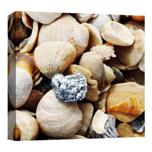 "Shells By The Sea II Decorative Canvas Wall Art 16""x16"" - PTM Images - image 1 of 1"