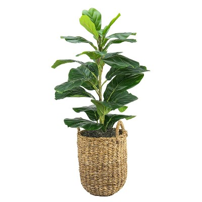 """30"""" x 16"""" Artificial Fig Plant in Basket with Handles - LCG Florals"""
