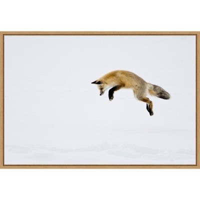 "23"" x 16"" Red Fox in Snow by Deborah Winchester Danita Delimont Framed Canvas Wall Art - Amanti Art"