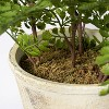"""13"""" x 13"""" Artificial Fern Plant in Terracotta Pot - Threshold™ designed with Studio McGee - image 4 of 4"""