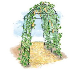 Extra Tall Titan Squash Tunnel, Lightweight Metal Garden Trellis for Vegetables and Flowers - Gardener's Supply Company