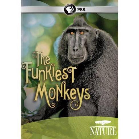 Nature: The Funkiest Monkeys (DVD) - image 1 of 1