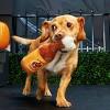 BARK Pumpkin Ale Dog Toy -  Bubblin' Pumpkin Ale - image 3 of 7