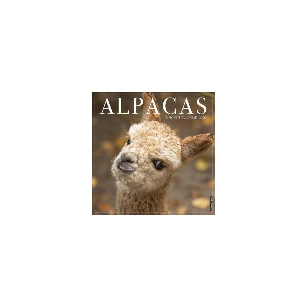 Alpacas 2020 Calendar - (Paperback)