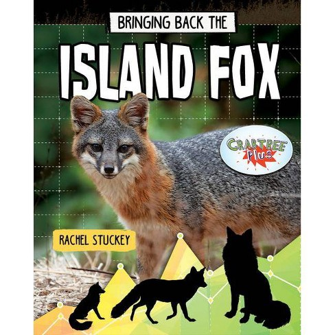 Bringing Back the Island Fox - (Animals Back from the Brink) by  Rachel Stuckey (Paperback) - image 1 of 1