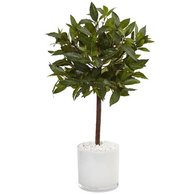2ft Artificial Sweet Bay Tree in White Glossy Cylinder - Nearly Natural