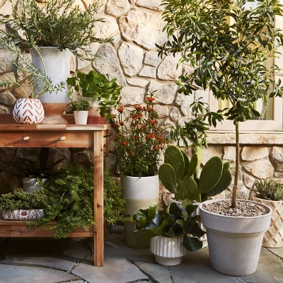 Our Favorite Outdoor Planters Collection