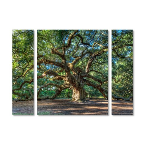 "36.5""x48"" Pierre Leclerc 'Angel Oak Charleston' Multi Panel Decorative Wall Art set - Trademark Fine Art - image 1 of 4"