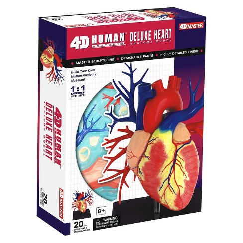 4D Master Life-size Human Heart Anatomy Model 20pc : Target