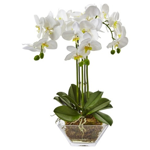 Triple Phalaenopsis Orchid In Glass Vase Nearly Natural Target