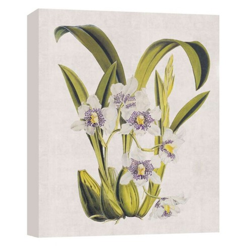 """Floral IV Decorative Canvas Wall Art 11""""x14"""" - PTM Images - image 1 of 1"""