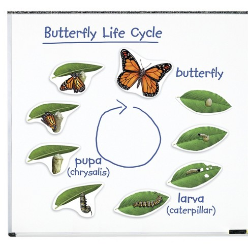 Learning Resources Giant Magnetic Butterfly Life Cycle - image 1 of 3
