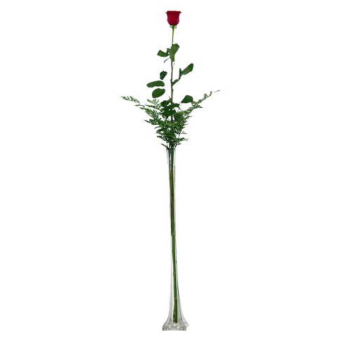 Fresh Cut 35 Foot Single Stem Red Rose With Clear Vase Target