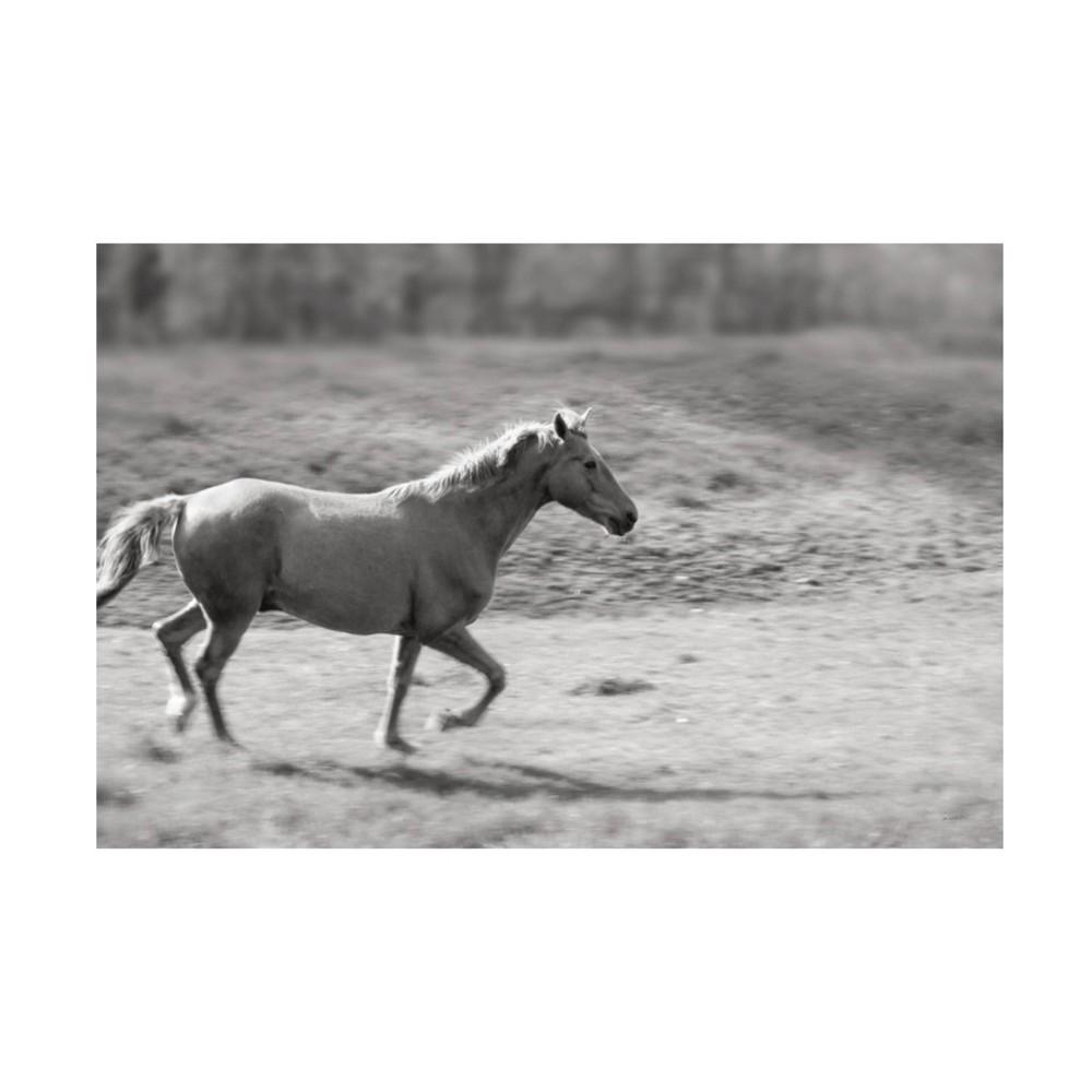 "Reviews 12"" x 19"" Sue Schlabach 'Pasture Run' Unframed Wall Canvas - Trademark Fine Art"