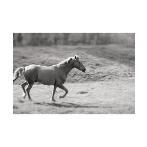 16 X 24 Sue Schlabach Pasture Run Unframed Wall Canvas Trademark Fine Art Target