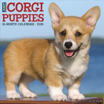 Just Corgi Puppies 2019 Calendar - (Paperback)