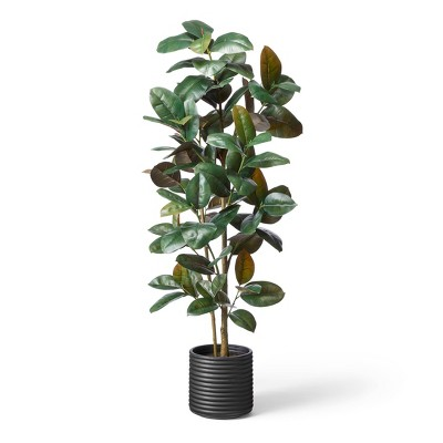 """68.5"""" Faux Rubber Tree in Ribbed Pot Black - Hilton Carter for Target"""