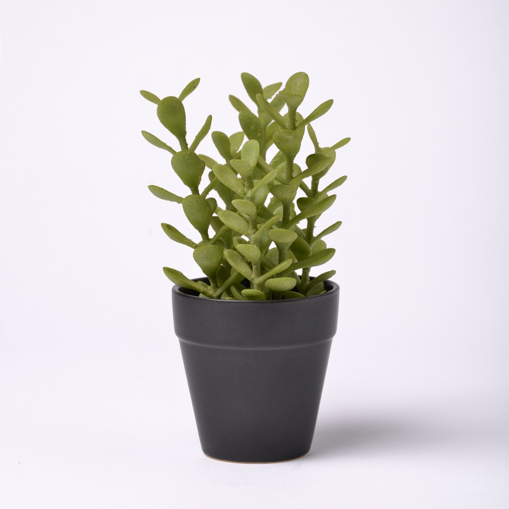 Image of 9 Potted Succulent - Lloyd & Hannah