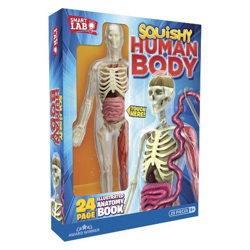 Squishy Human Body Anatomy Kit Target