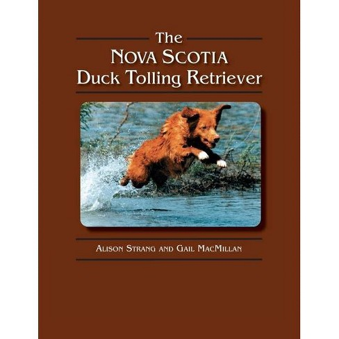 The Nova Scotia Duck Tolling Retriever - by  Gail MacMillan & Alison Strang (Paperback) - image 1 of 1