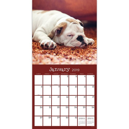 2019 Wall Calendar Dogs Sleeping Tf Publishing Target