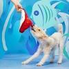 BARK stingray dog toy - Sting Crosby the Ray - image 2 of 4