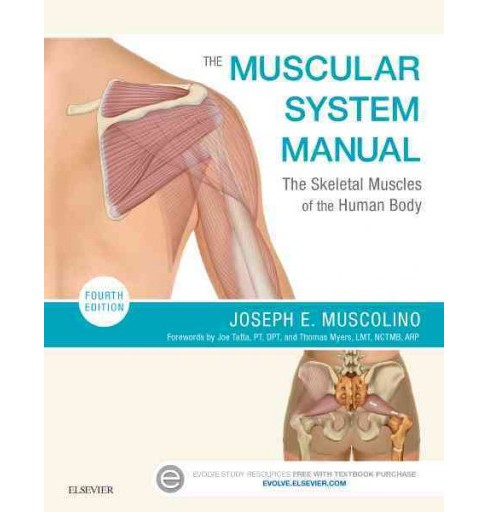 Muscular System Manual : The Skeletal Muscles of the Human Body (Paperback) (Joseph E. Muscolino) - image 1 of 1