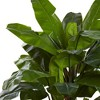 7ft Indoor/Outdoor UV Resistant Full Triple Stalk Banana Tree - Nearly Natural - image 2 of 3