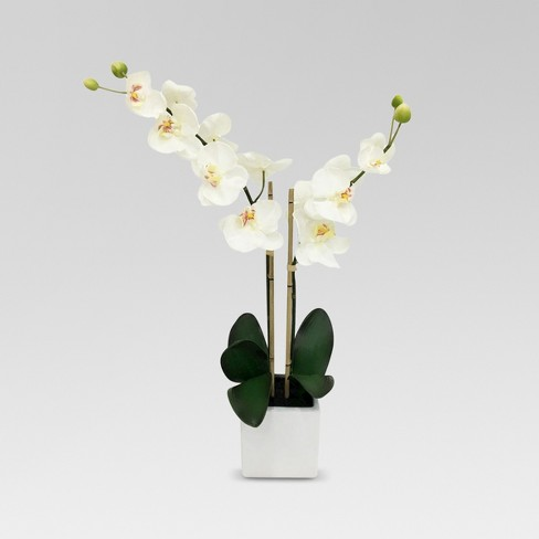 White Orchid In White Pot Large Threshold Target