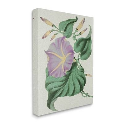 Stupell Industries Vintage Purple Yellow Morning Glory Floral Study