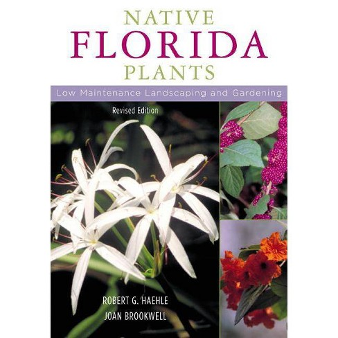 Native Florida Plants - by  Robert G Haehle & Joan Brookwell (Paperback) - image 1 of 1
