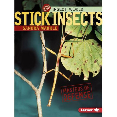 Stick Insects - (Insect World) by  Sandra Markle (Paperback) - image 1 of 1
