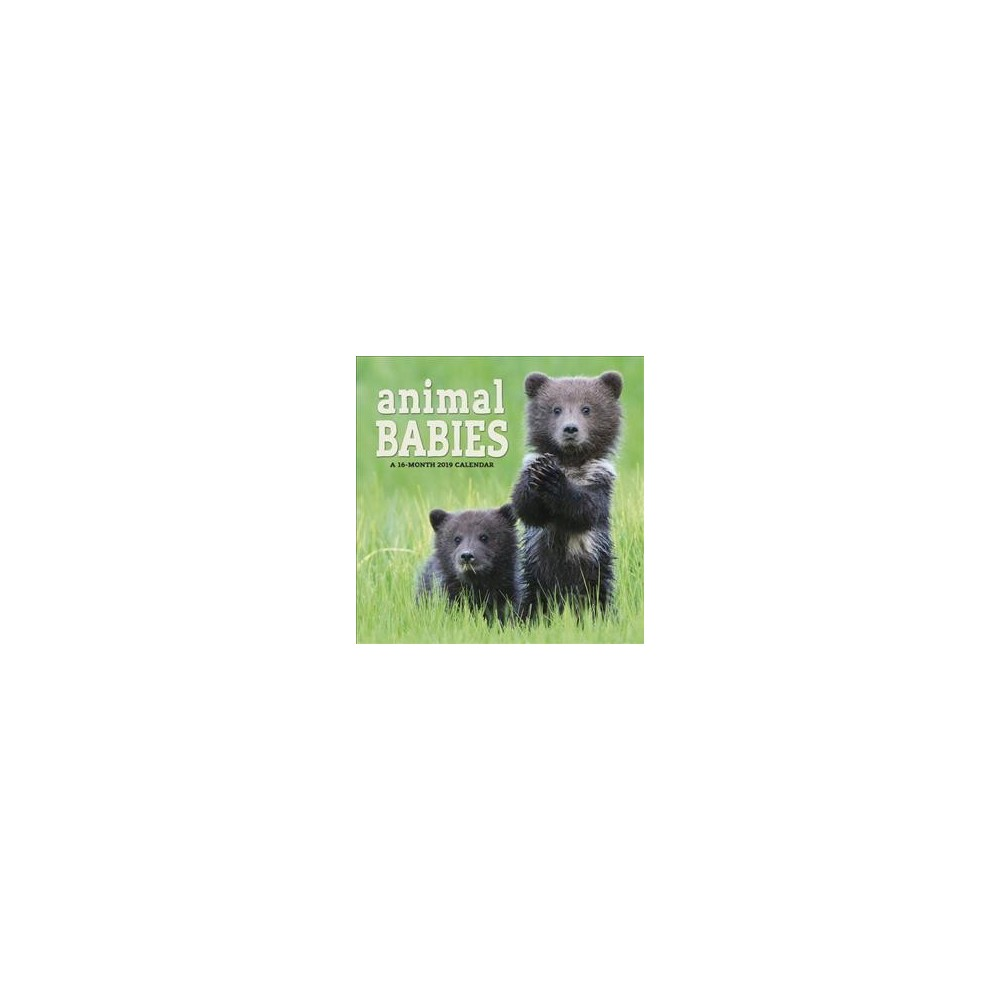 Animal Babies 2019 Calendar - (Paperback)