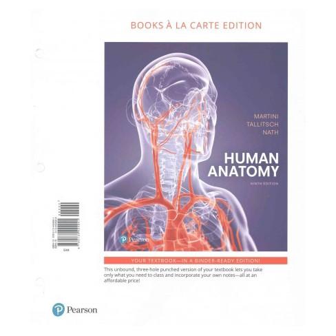 Human Anatomy Paperback Phd Frederic H Martini Phd Robert