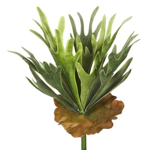 Artificial Staghorn Fern Bush Frosted Green - Vickerman - image 1 of 3