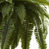 """36"""" x 29"""" Artificial Boston Fern Hanging Basket - Nearly Natural - image 3 of 3"""