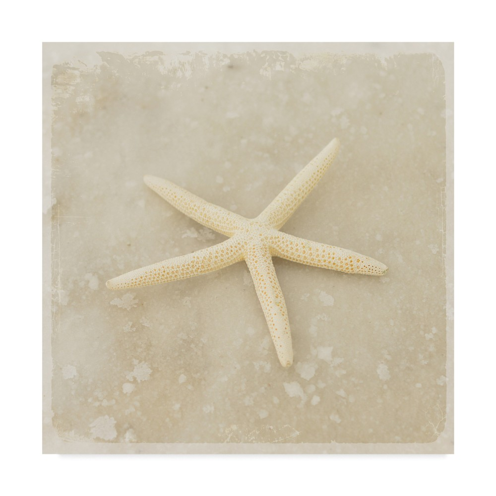 Lightbox journal Gypsy Sea Stars Unframed Wall 18