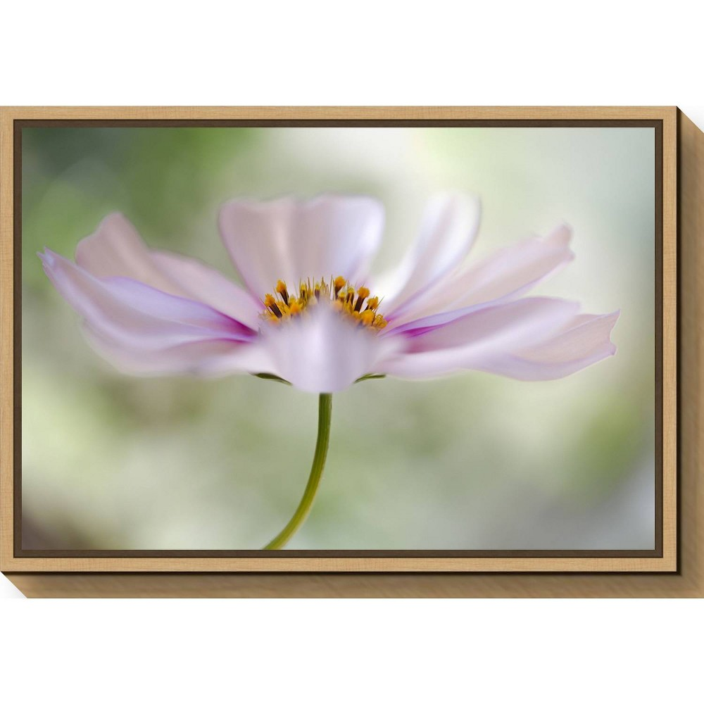 "Image of ""23"""" X 16"""" Cosmos Cloud By Mandy Disher Maple - Amanti Art, Yellow Green Pink"""