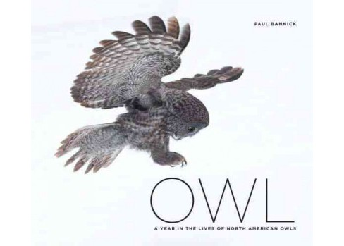 Owl : A Year in the Lifes of North American Owls (Hardcover) - image 1 of 1