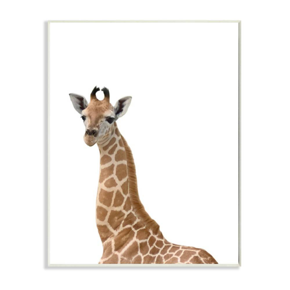 "Image of ""10""""x0.5""""x15"""" Baby Giraffe Studio Photo Wall Plaque Art - Stupell Industries"""