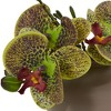 """7"""" x 6.5"""" 3pc Artificial Phalaenopsis Orchid Arrangement in Ceramic Pot Set - Nearly Natural - image 2 of 3"""