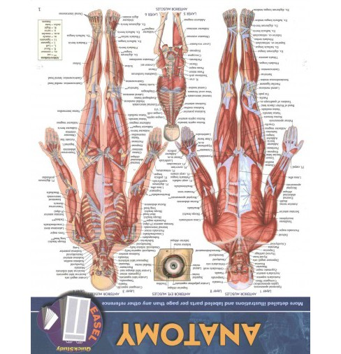 Anatomy (Paperback) (Vincent Perez) - image 1 of 1
