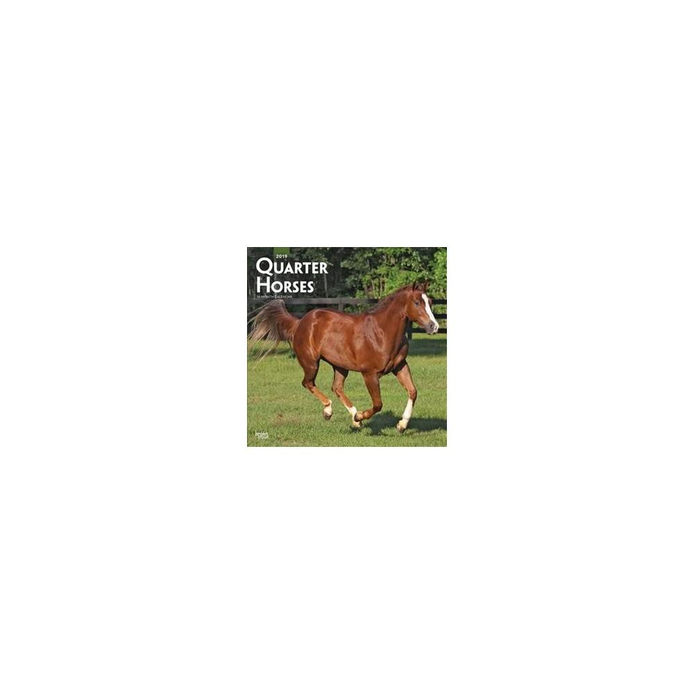 Quarter Horses 2019 Calendar - (Paperback)