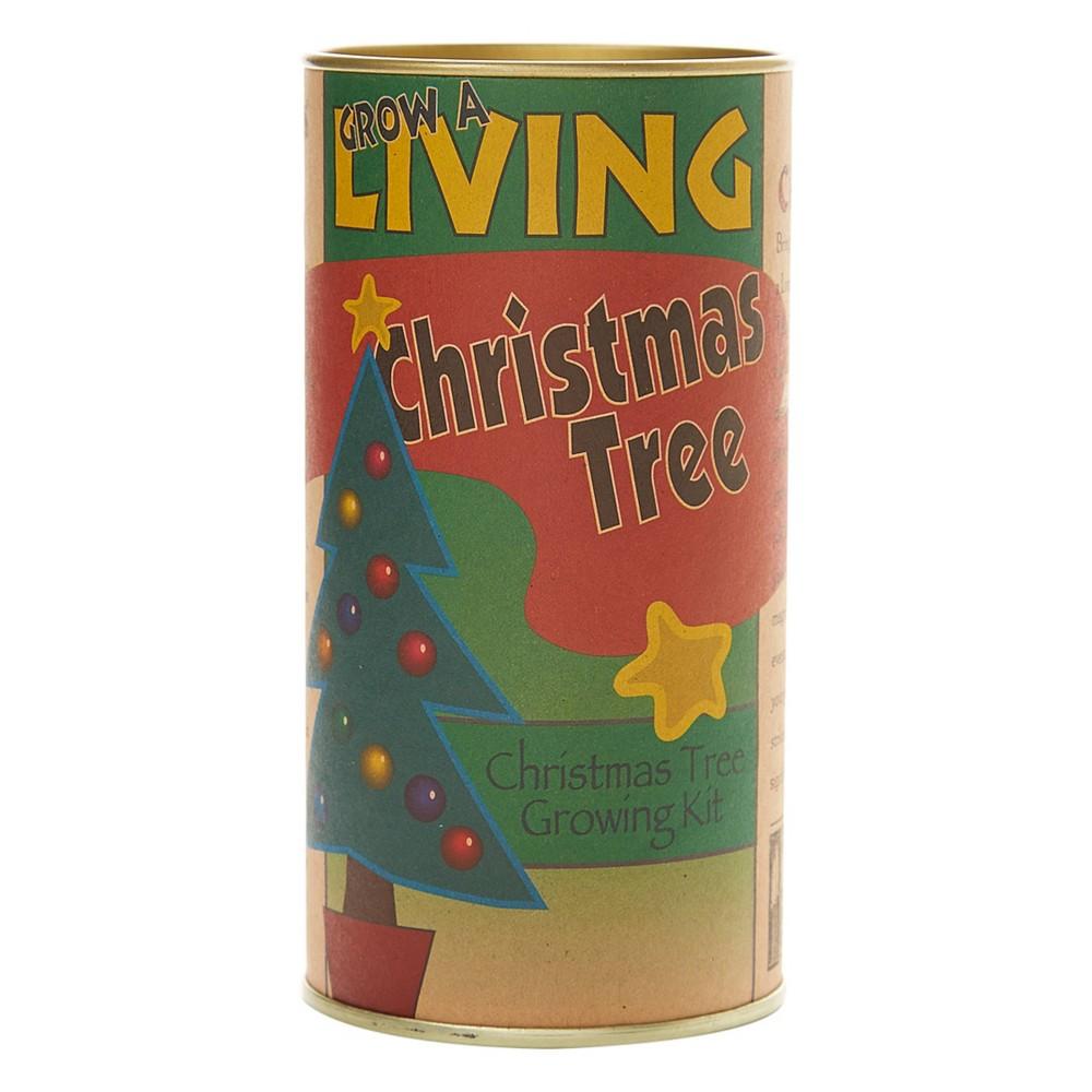 Image of Living Christmas Tree Seed Grow Kit Balsam Fir - The Jonsteen Company